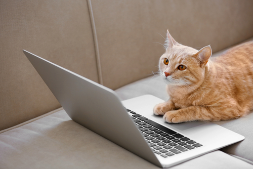 ノートパソコンを見る猫