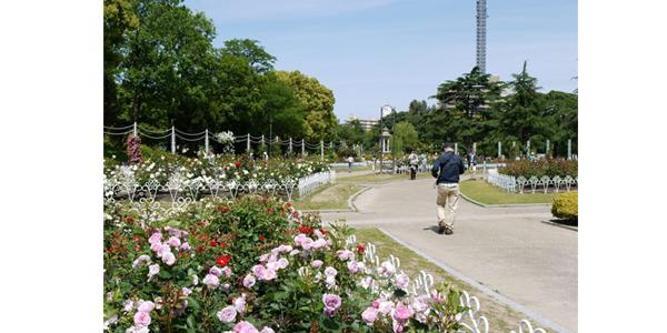 4.8-鶴舞公園
